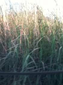tall grass italy